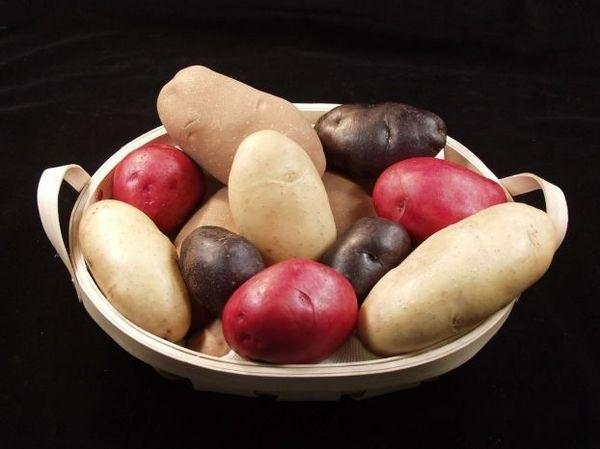 Фото картофеля разного сорта